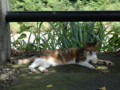 Cats of Houtong, #4371