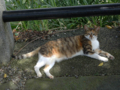 Cats of Houtong, #4373