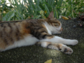 Cats of Houtong, #4375