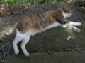 Cats of Houtong, #4377