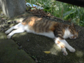 Cats of Houtong, #4379
