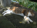 Cats of Houtong, #4380