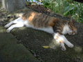 Cats of Houtong, #4381