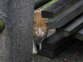 Cats of Houtong, #4387