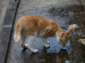 Cats of Houtong, #4388