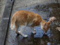 Cats of Houtong, #4389