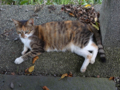 Cats of Houtong, #4394