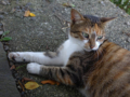 Cats of Houtong, #4396