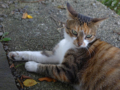 Cats of Houtong, #4397