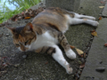 Cats of Houtong, #4398