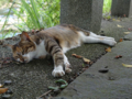 Cats of Houtong, #4400
