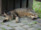 Cats of Houtong, #4404