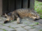 Cats of Houtong, #4406
