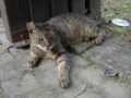 Cats of Houtong, #4407