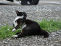 Cats of Houtong, #4411
