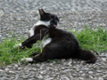 Cats of Houtong, #4412