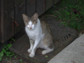 Cats of Houtong, #4421