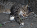 Cats of Houtong, #4431
