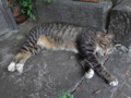 Cats of Houtong, #4432