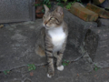 Cats of Houtong, #4436