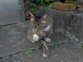 Cats of Houtong, #4437