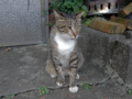 Cats of Houtong, #4438