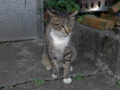 Cats of Houtong, #4439