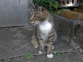 Cats of Houtong, #4440