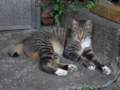 Cats of Houtong, #4441