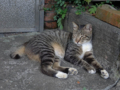 Cats of Houtong, #4442