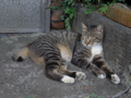 Cats of Houtong, #4443