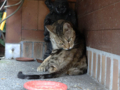 Cats of Houtong, #4449