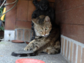 Cats of Houtong, #4450