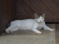 Cats of Houtong, #4452