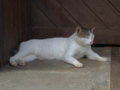 Cats of Houtong, #4453