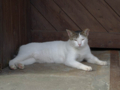 Cats of Houtong, #4454