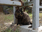 Cats of Houtong, #4456