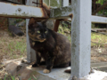 Cats of Houtong, #4457