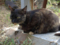 Cats of Houtong, #4458