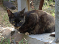 Cats of Houtong, #4460