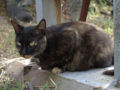 Cats of Houtong, #4462