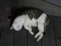 Cats of Houtong, #4464