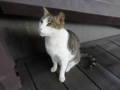 Cats of Houtong, #4472