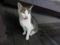 Cats of Houtong, #4473