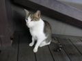 Cats of Houtong, #4476