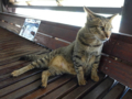 Cats of Houtong, #4478