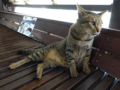 Cats of Houtong, #4479