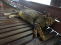 Cats of Houtong, #4480