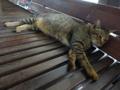 Cats of Houtong, #4481