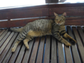 Cats of Houtong, #4482